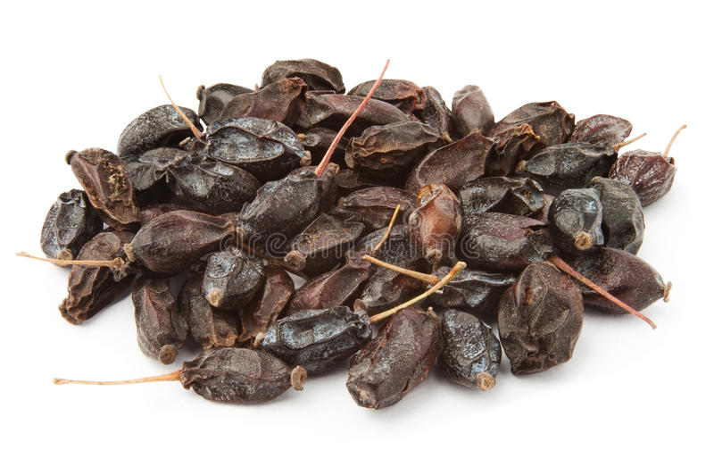 Download Barberry heap stock image. Image of heap, organic, black - 24221337