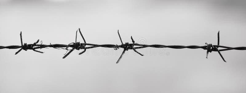 Barbet w czarny i biały fotografii zdjęcie royalty free