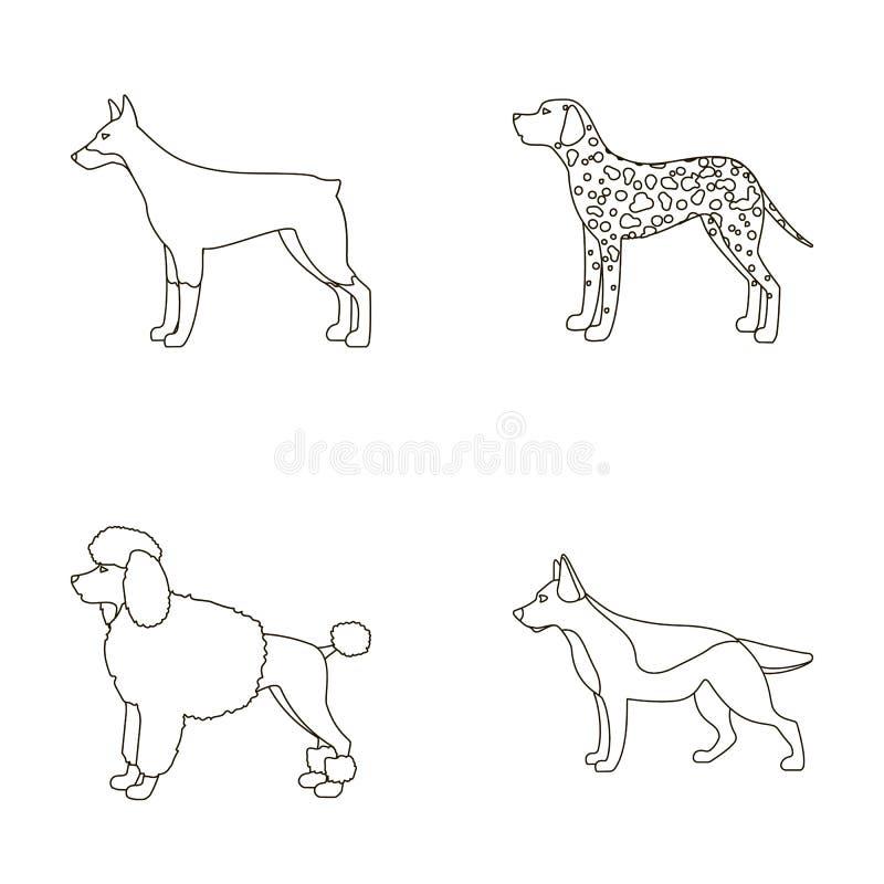 Barboncino, doberman, dolmatin, pastore tedesco Le razze del cane hanno messo le icone della raccolta nelle azione di simbolo di  royalty illustrazione gratis