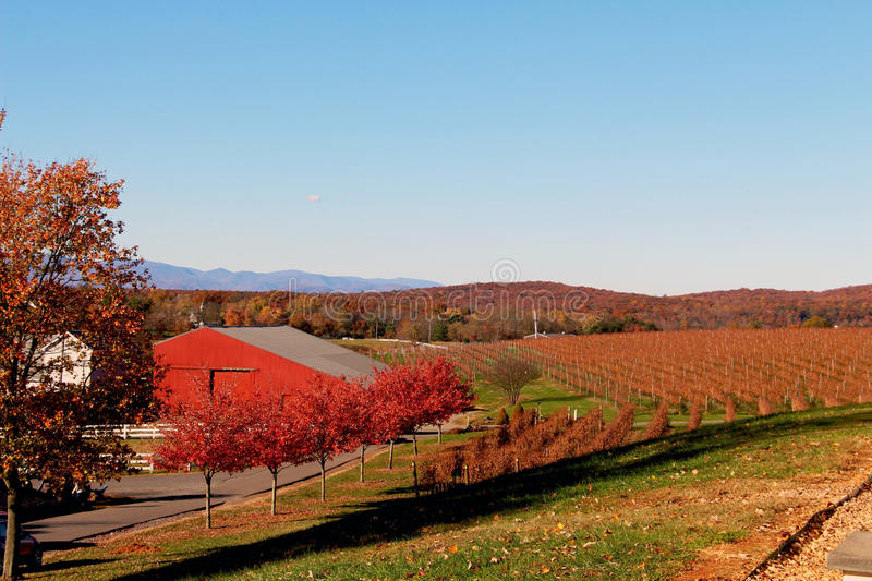 Barboursville Vineyards in the fall royalty free stock photography