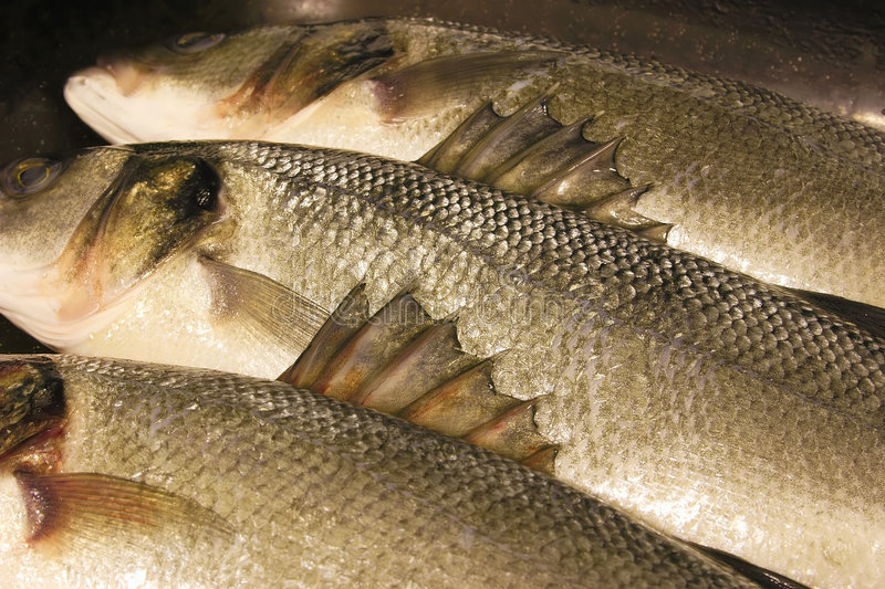 Download Barbs On The Fins Of Sea Bass Stock Image - Image of animal, fresh: 587199