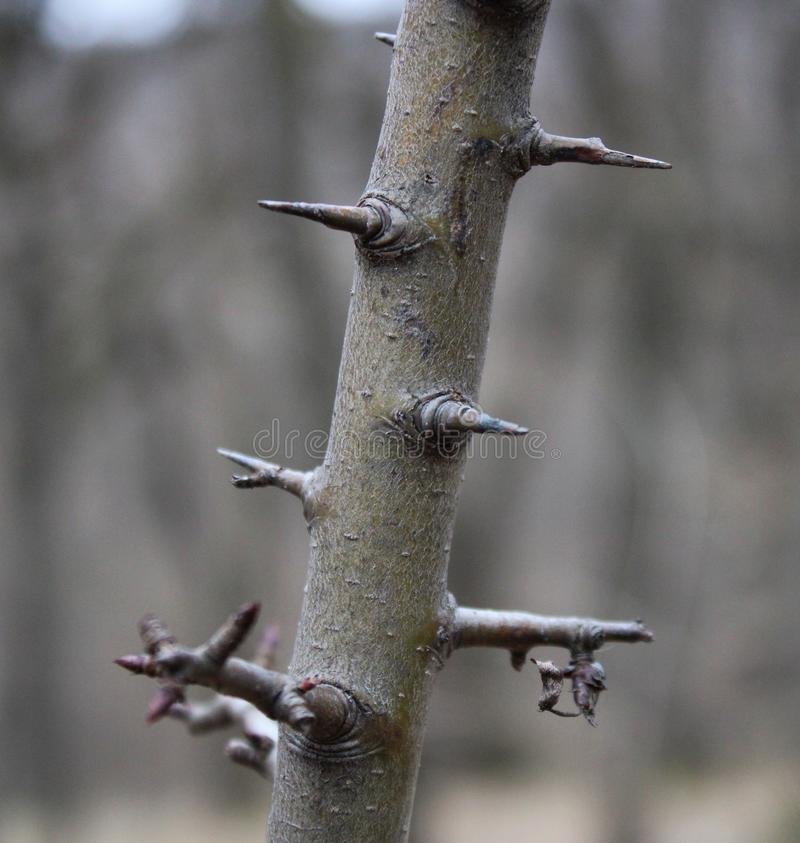 Free Barbs On A Tree Royalty Free Stock Photo - 141893255