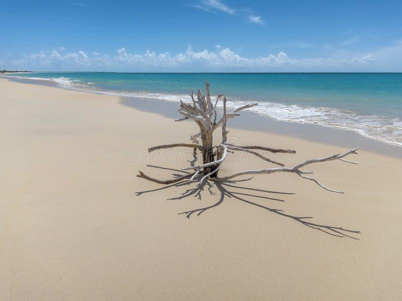 Barbuda 17 miles long beach stock photo