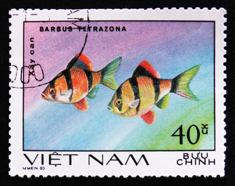 Barbus Tetrazona, Ornamental Fish, Aquarium fishes serie, circa 1980. MOSCOW, RUSSIA - APRIL 2, 2017: A post stamp printed in Vietnam, shows fishes Barbus stock photography