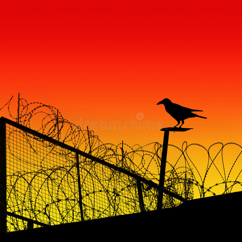Barbwire. A Barbwire Fence with Crow stock illustration