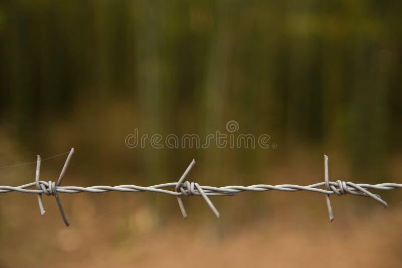 barbwire стоковые фото
