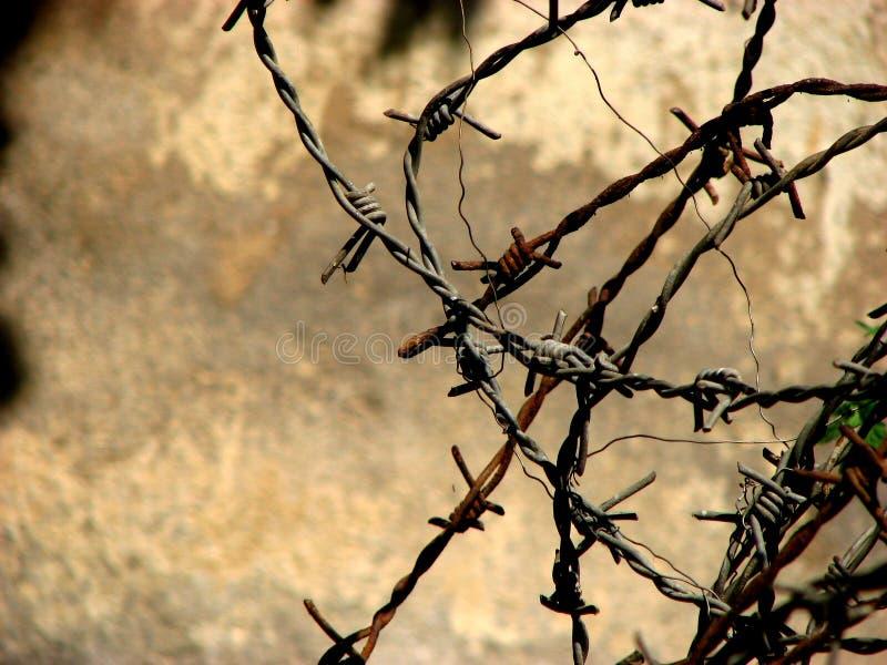Barbwire immagine stock