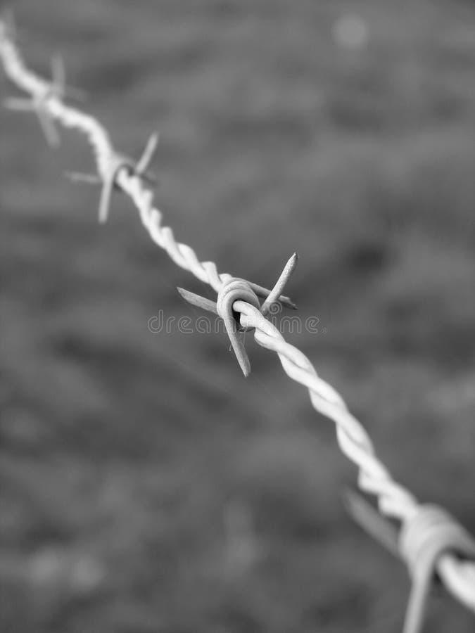 Barbwire fotografia stock