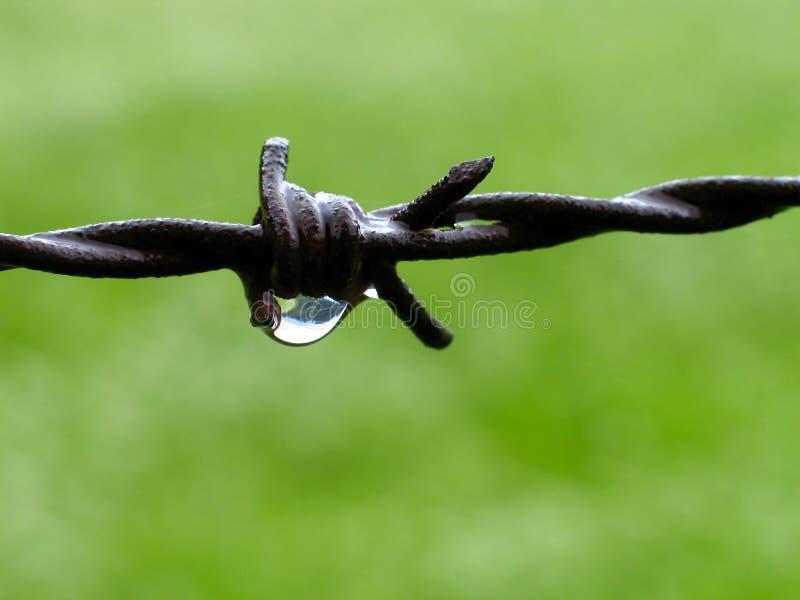 Barbwire stock afbeelding