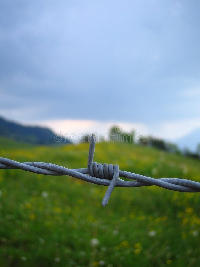 Barbwire immagine stock
