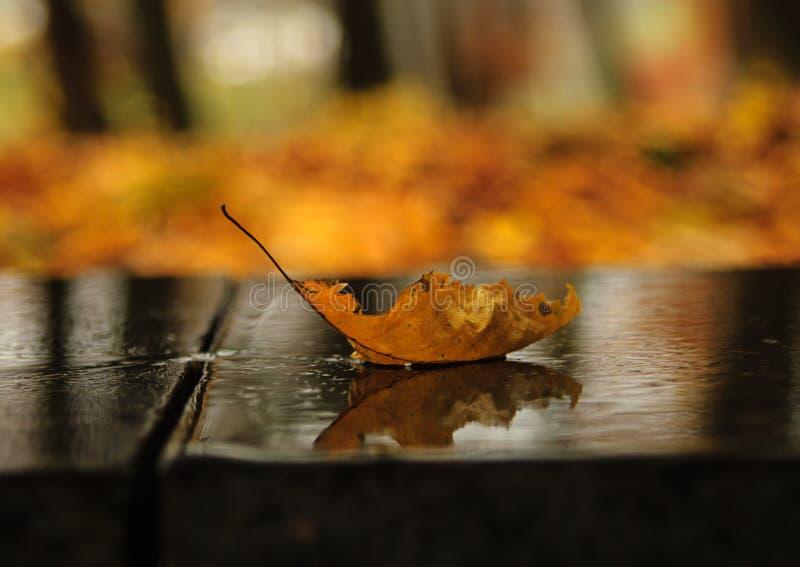 Barca di autunno fotografia stock libera da diritti