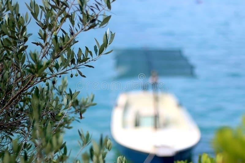 Barca e Olive Tree immagine stock libera da diritti
