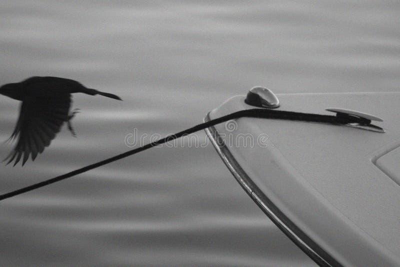 Barca ed uccello immagini stock