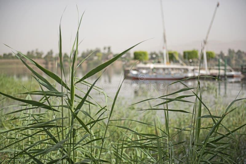 Barca egiziana tradizionale di felluca sul fiume Nilo fotografia stock