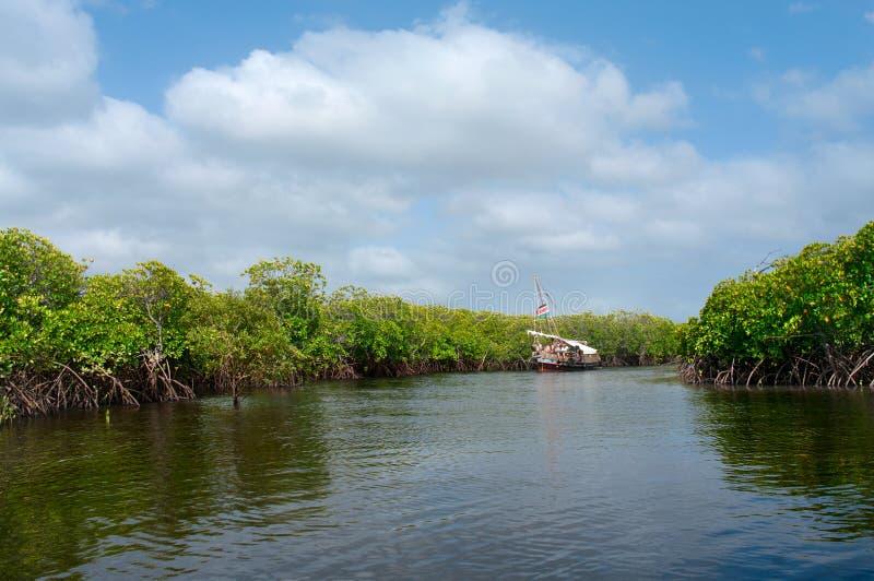 Barca nella foresta della mangrovia fotografia stock