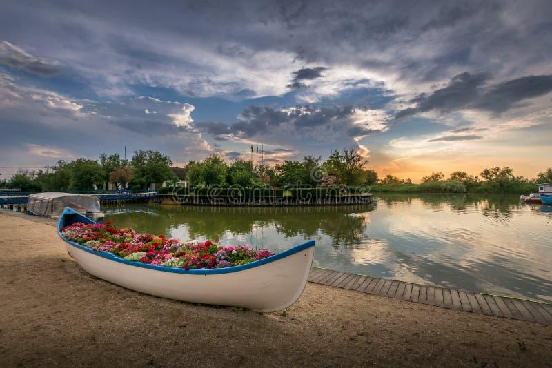 Barca riempita di fiori in un bello paesaggio iconico di tramonto sopra il delta di Danubio in Gura Portitei, Romania fotografie stock libere da diritti