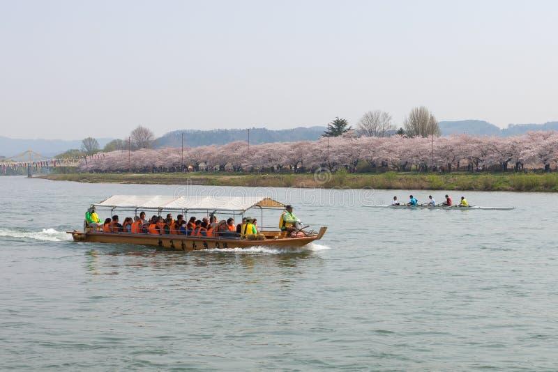 Barca turistica e fiori di ciliegia della riva del fiume di Kitakami nel Giappone fotografie stock libere da diritti