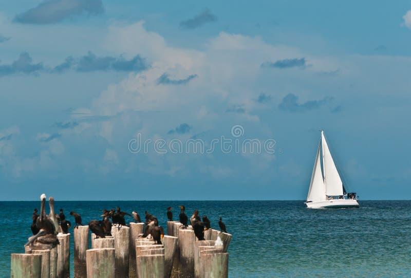 Barca a vela, nella navigazione di giorno ventoso e soleggiato lungo l'orizzonte immagine stock libera da diritti