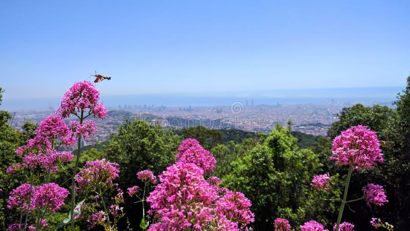 Barcelona Altura Flores elementarz Plano zdjęcia royalty free