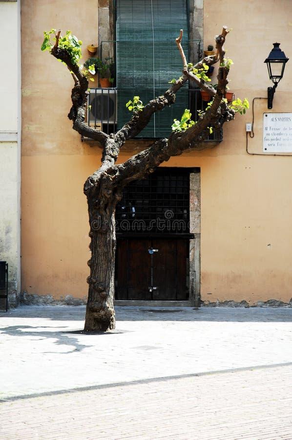 Barcelona arkitekturSpanien resor royaltyfri foto