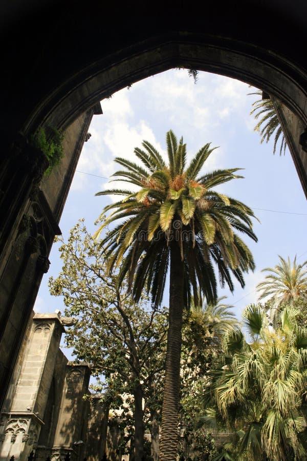barcelona palmträd royaltyfria bilder