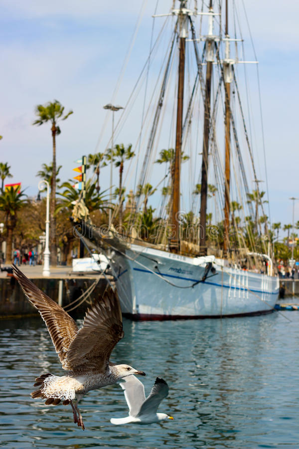 Barcelona port and seagulls stock photography