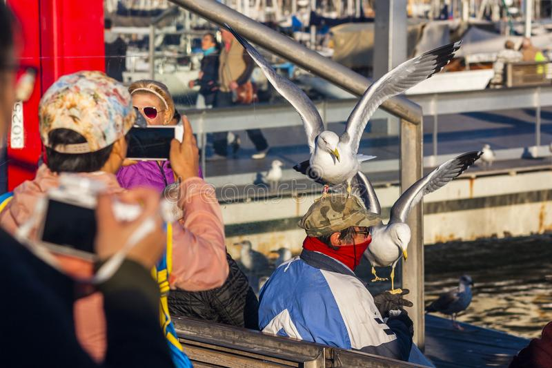 Barcelona, Spain, February 2017: Giant Western gull sitting on head of fisherman. stock photography