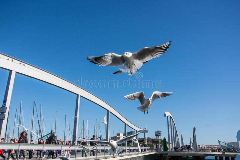 BARCELONA, SPAIN - FEBRUARY 12, 2014: A view to a pier with yachts, an embankment and flying seagulls at Barcelona port. Catalonia, Spain royalty free stock photography