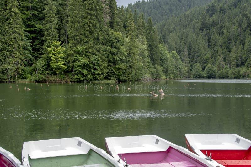 Barche colorate nel lago rosso in Romania fotografia stock
