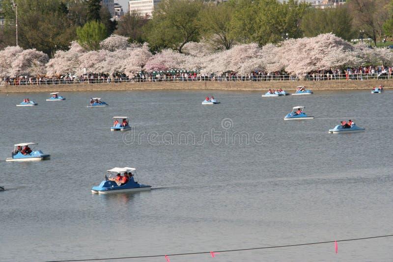 Barche del pedale fotografie stock