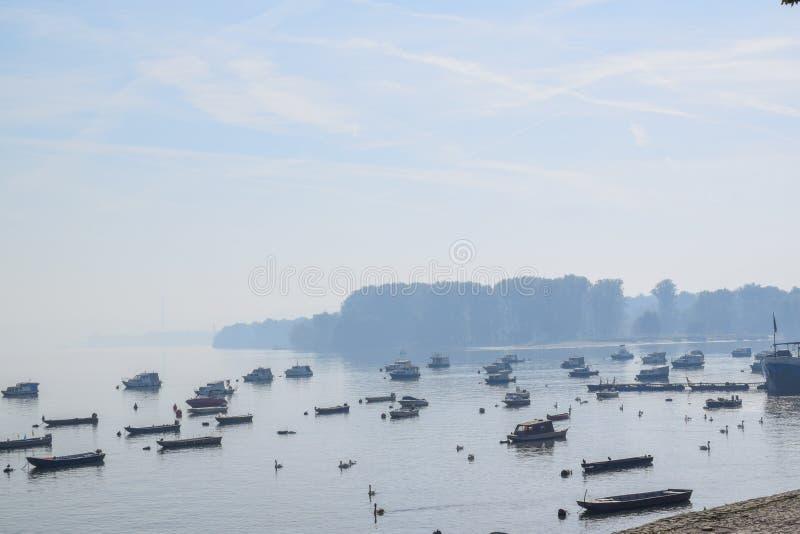 Barche e cigni ancorati sul fiume sulla mattina soleggiata nebbiosa fotografia stock
