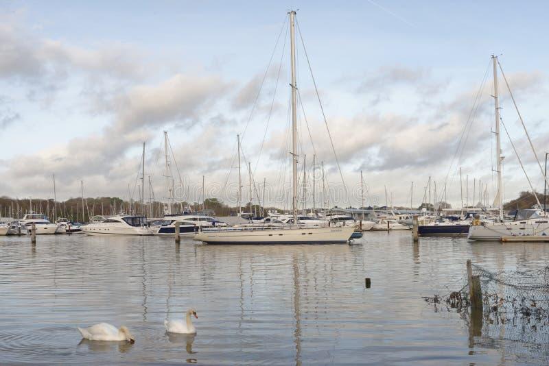 Barche e yacht attraccati in porto, bursledon, Inghilterra, Europa swans immagine stock