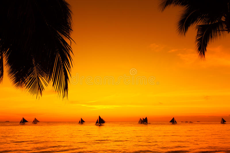 Barche a vela al tramonto su un mare tropicale Palme sulla spiaggia Silho fotografia stock libera da diritti