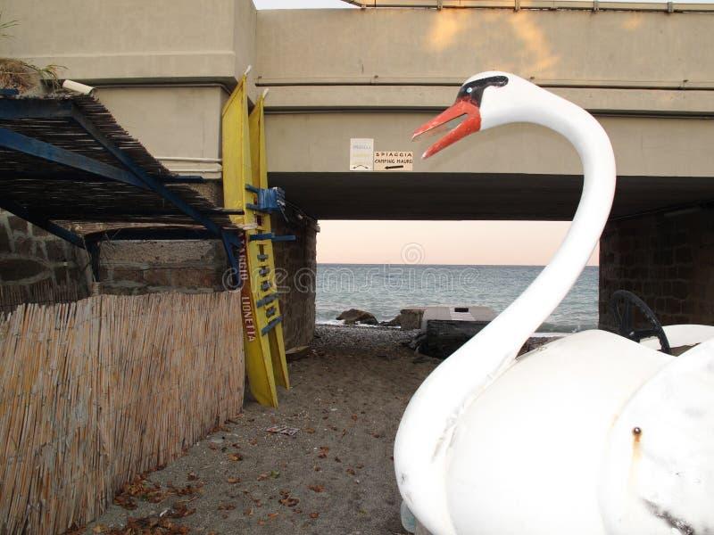 Barco branco da cisne foto de stock royalty free