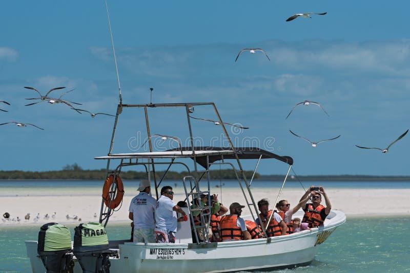 Barco da excursão com os turistas que alimentam nas gaivota no Holbox Laguna Conil, México imagem de stock
