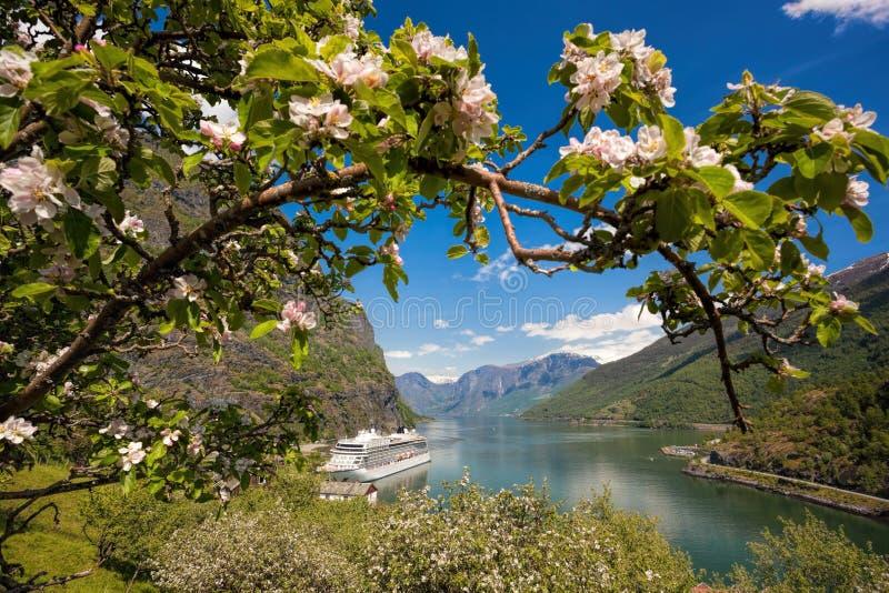Barco de cruceros contra árbol del flor en el puerto de Flam, Noruega fotos de archivo