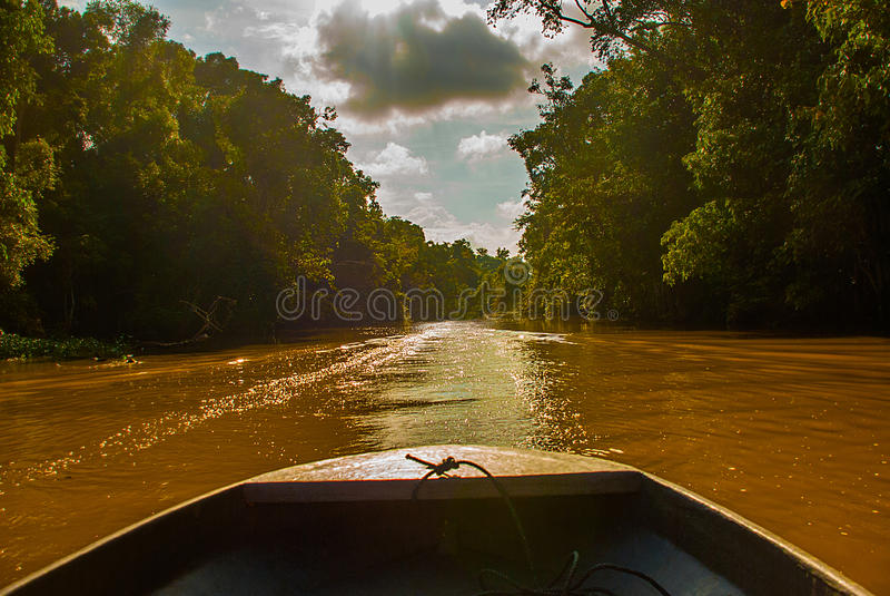 Barco de madeira que flutua no rio Kinabatangan e na floresta tropical densa Sabah, Bornéu, Malásia imagens de stock
