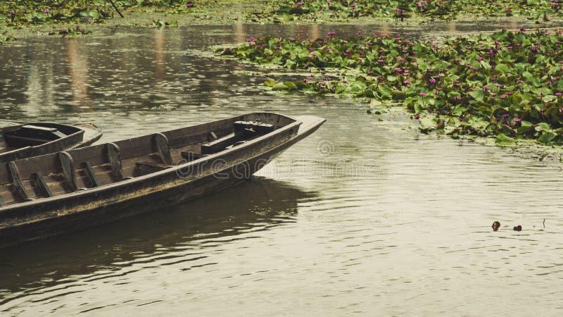 Barco de madeira velho e flor de lótus cor-de-rosa que florescem em um lago vintage fotos de stock