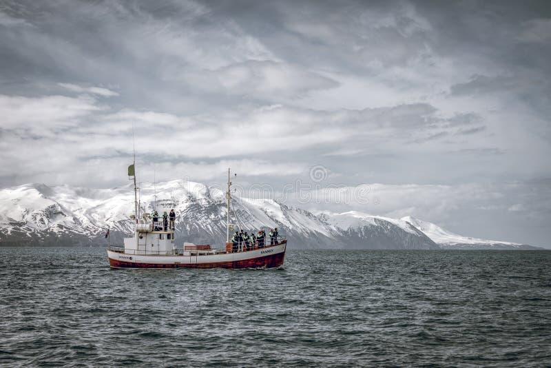 Barco de observación de la ballena en la primavera Islandia La gente está explorando para las ballenas jorobadas imagenes de archivo