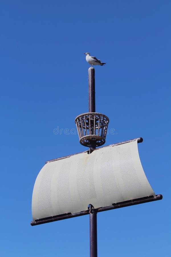 Barco de vela y gaviota fotos de archivo libres de regalías