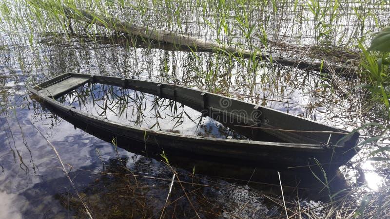 Barco destruído em um junco em um lago foto de stock royalty free