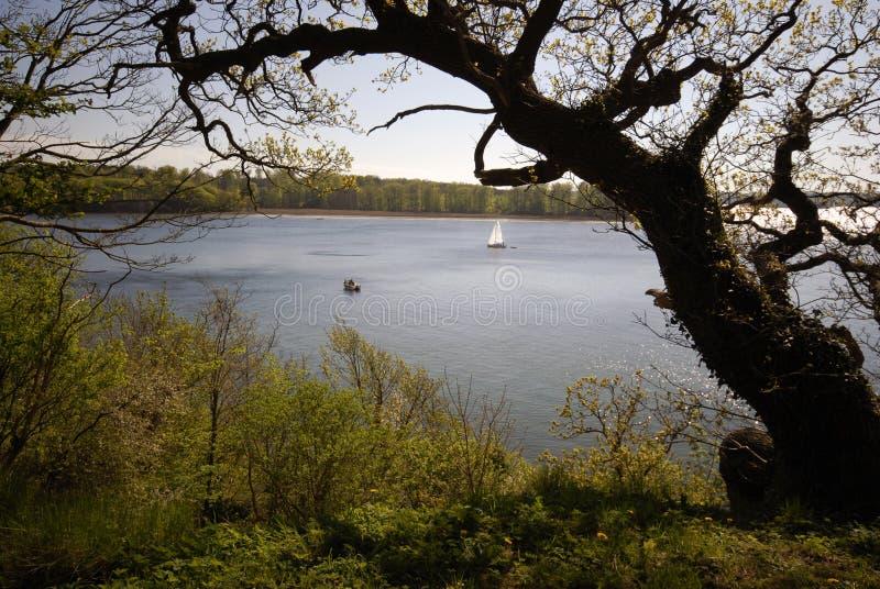 Barco e floresta fotos de stock