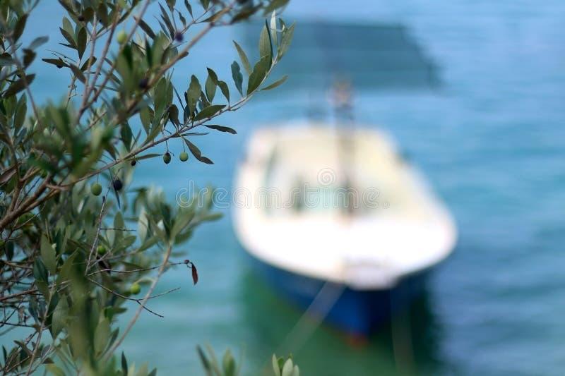 Barco e Olive Tree fotografia de stock