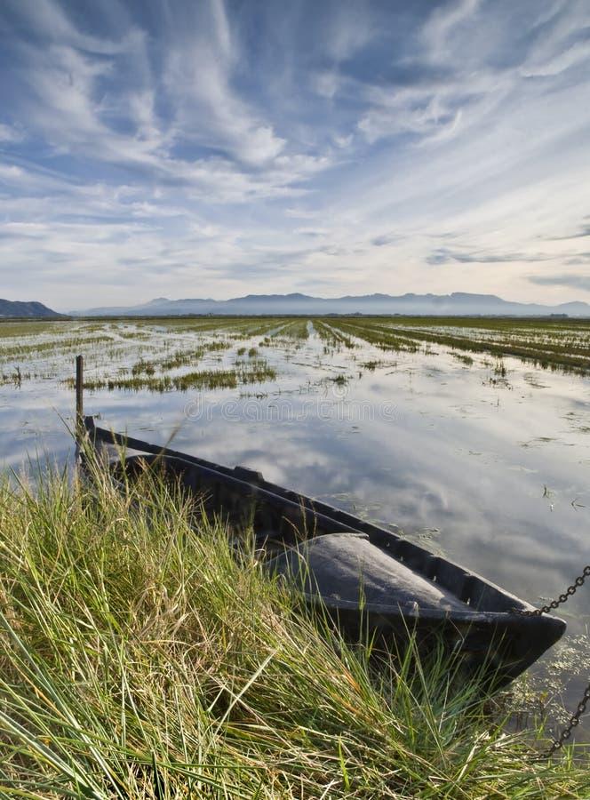 Barco no arroz Fieds imagens de stock royalty free