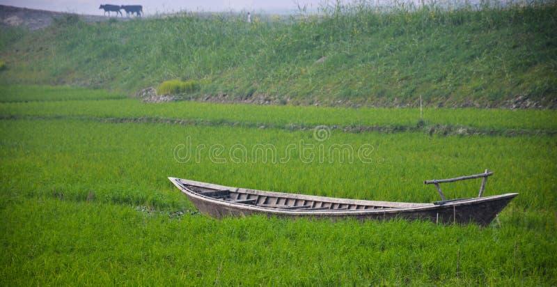 Barco no campo verde foto de stock