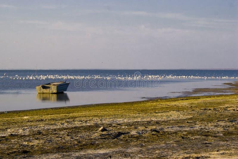 Barco pelo mar com pássaros fotos de stock