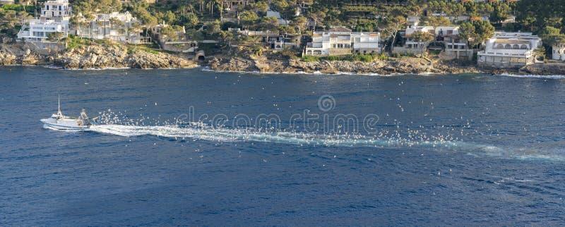 Barco perseguido por gaviotas imágenes de archivo libres de regalías