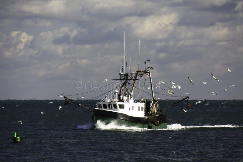 Barco rastreador y gaviotas de la pesca de Nueva Inglaterra imagen de archivo