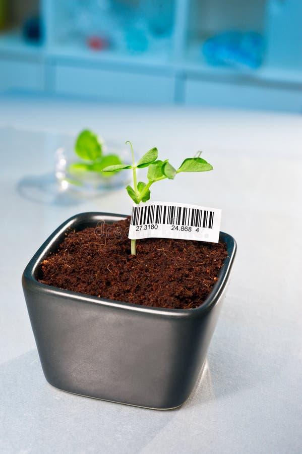 Free Barcode On Transgenic Plant Royalty Free Stock Photo - 26197595