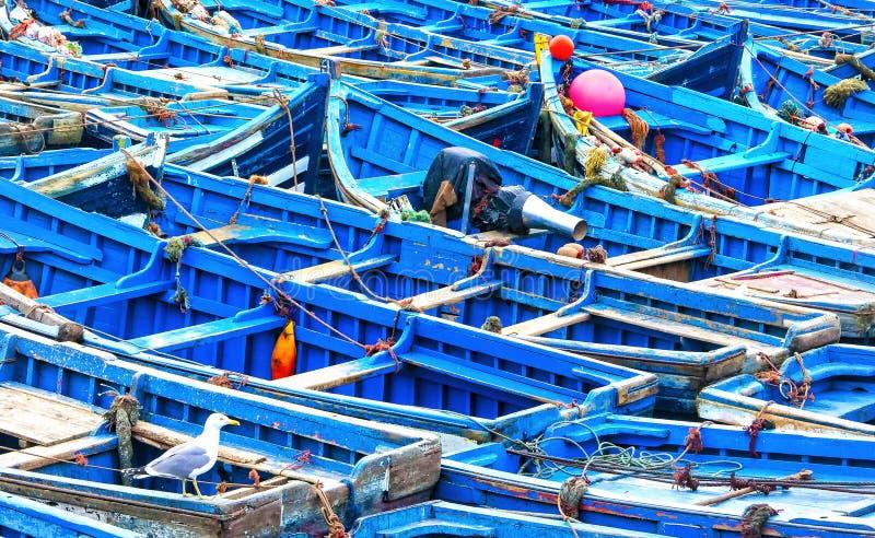 Barcos de pesca azuis com a gaivota no primeiro plano no porto de Essaouira, Marrocos imagens de stock